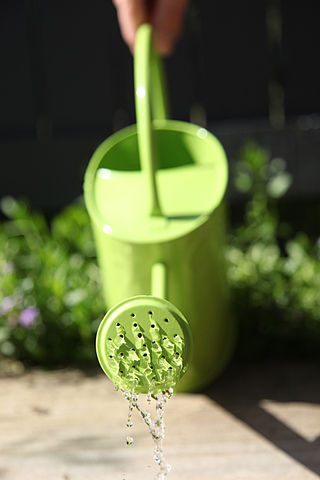Water down urine for your garden