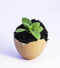 Egg shell for seedlings