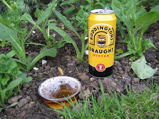 Beer trap for snails