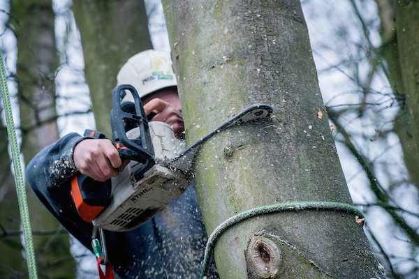 Ben Robinson - Tree Surgery