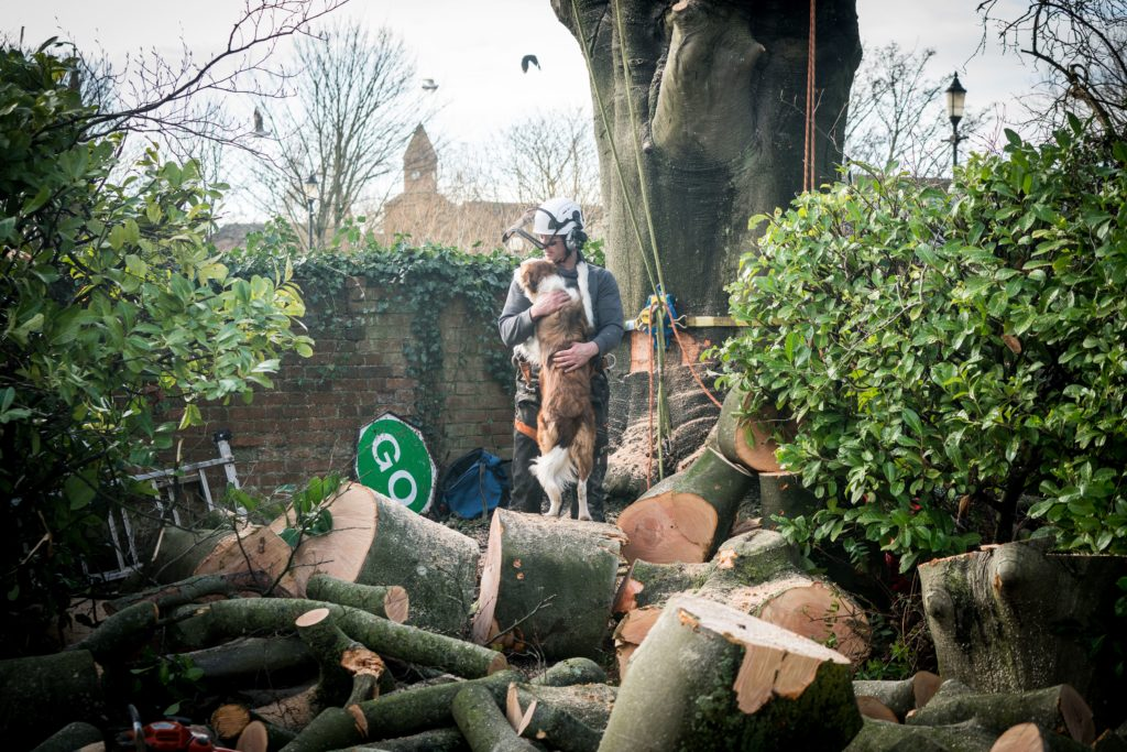 A member of the team at Rhys Dobbs Tree Services takes a few minutes break while working on a diseased tree in a garden in Winchester.